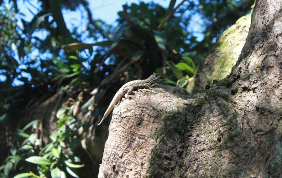 Tour Ecológico do Pão de Açúcar: fauna do Morro da Urca