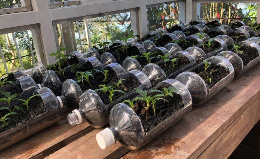 Tour Ecológico do Pão de Açúcar: mudas em garrafas pet