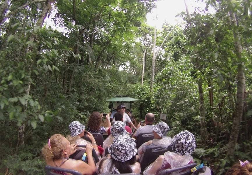 Macuco Safari: tour na selva.