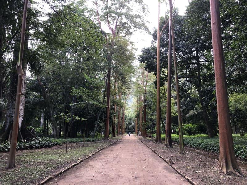 Aleia Barbosa Rodrigues no Jardim Botânico do Rio de Janeiro.
