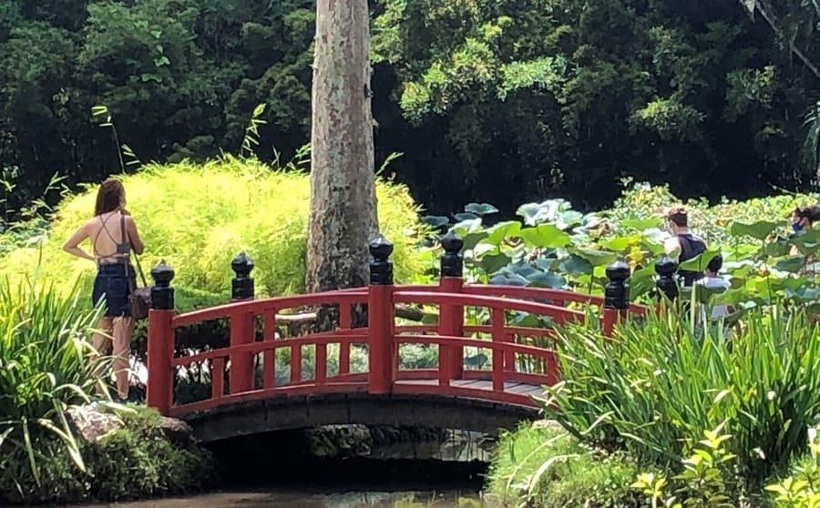 Japanese Garden at the Botanical Garden of Rio de Janeiro