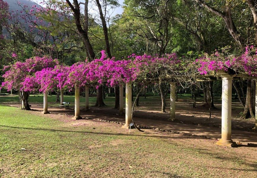Pergola full of bouganvilles at the Botanical Garden of Rio de Janeiro