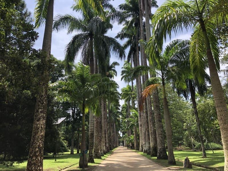 Royal palm trees avenue at the Botanical Garden of Rio de Janeiro