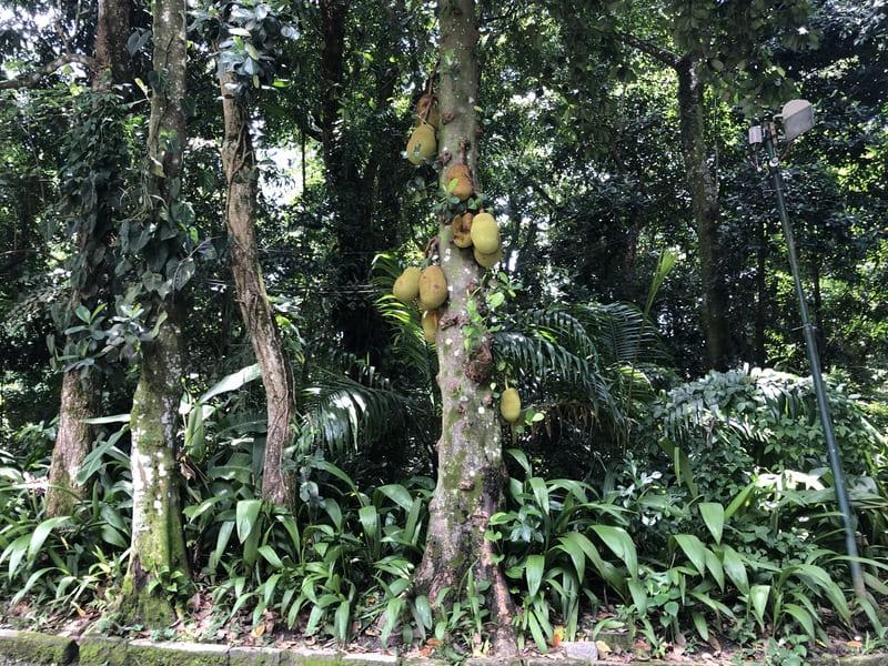 Vegetação de Mata Atlântica do Parque Lage no Rio de Janeiro